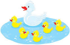 Duck and ducklings stock illustration