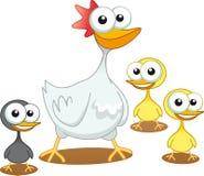 Duck Ducky Birds Stock Images