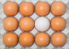 Duck egg among chicken eggs Stock Photo