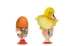 Duck egg-cup Royalty Free Stock Images