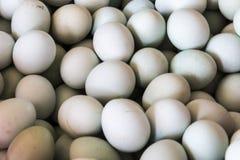 Duck egg Stock Photography