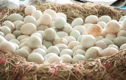 Duck egg Royalty Free Stock Images