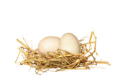 Duck egg in straw isolated on white background Royalty Free Stock Photography