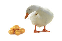Duck and egg Stock Images