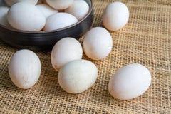 Duck Eggs Royaltyfri Bild
