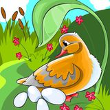 Duck with eggs. stock illustration