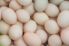 Duck Eggs images stock