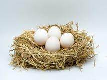 Duck Eggs Royaltyfria Foton
