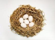 Duck Eggs Arkivfoton