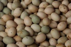 Duck Eggs Lizenzfreies Stockbild
