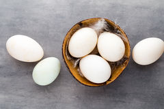 Duck eggs on a cage gray background Stock Photo