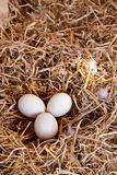 Duck eggs on chaff Royalty Free Stock Images