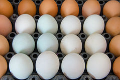 duck eggs and chicken egg  in carton box Stock Photo