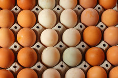 Duck eggs and chicken eggs Royalty Free Stock Photography