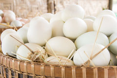 Duck eggs Royalty Free Stock Photos
