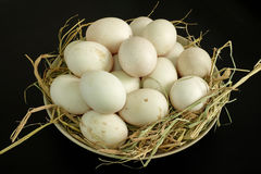 Duck eggs for cooking Stock Images