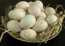 Duck eggs for cooking Stock Photography