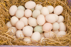 Duck eggs Stock Images