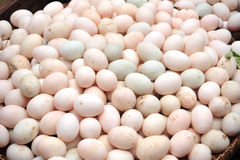 Duck eggs Royalty Free Stock Photos