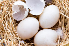 Duck eggs nest, spring Easter symbol. Stock Photography