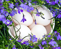 Duck eggs and flowers Royalty Free Stock Photos