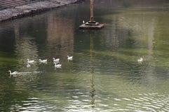 Duck Eleven fotografia de stock
