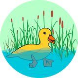 Duck en el lago, nadando en el agua libre illustration