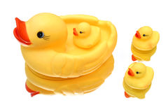Free Duck Family Stock Photography - 183392