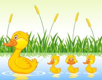 Duck family cartoon Stock Photo