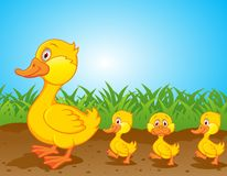 Duck family cartoon Stock Image