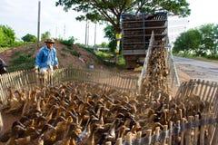 Duck farm Royalty Free Stock Photography