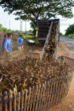 Duck farm stock photos