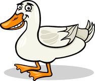 Duck farm bird animal cartoon illustration Stock Images
