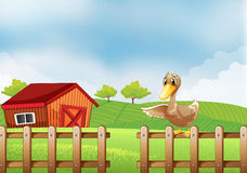 A duck at the farm Royalty Free Stock Photo