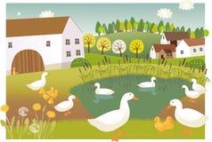 Duck farm Royalty Free Stock Photo