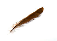 Duck feather Stock Photography