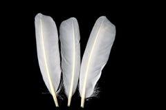Duck Feathers blanco en un fondo negro Imágenes de archivo libres de regalías