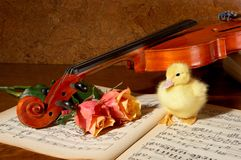 Duck and fiddle Stock Image