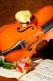 Duck on a fiddle Stock Images