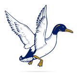 Duck flight Stock Photos