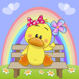 Duck with flower Royalty Free Stock Photos