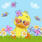 Duck with flowers Royalty Free Stock Photography