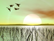 Duck flying by green sunset Royalty Free Stock Image