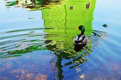 A duck following the reflection of a windmill Stock Image