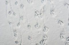 Duck foot prints on snow Stock Image