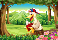 A duck at the forest reading Royalty Free Stock Image