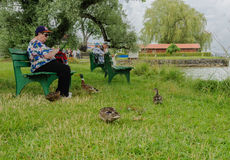 Duck fraternizing with a woman tourist Stock Images