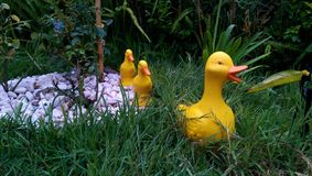 Duck garden decoration. Tree ducks walking in the garden Royalty Free Stock Photo