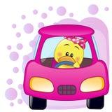 Duck girl in a car Stock Photos