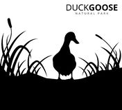 Duck or goose with grass savannah vector logo illustration. Template stock illustration